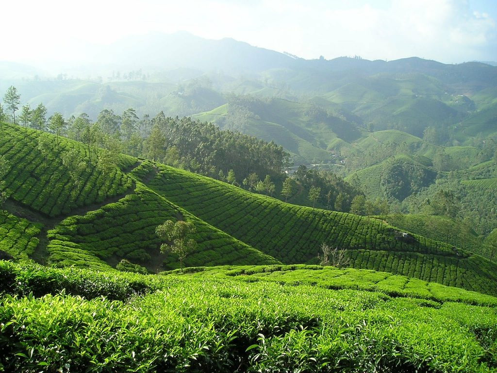 best time to take green tea extract for weight loss